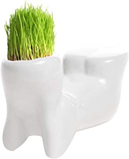 Bonsai Head Grass Doll Hair White Lazy Man Rely Plant Garden DIY Mini,Indoor Plant Pots - Gallon Half Seedling Bulk Large ...