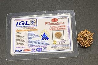 15 Mukhi Ganesh Rudraksha 24.19mm 2.27 GMS Nepal Rudraksha / Natural Fifteen Face with Ganesh Trunk Rare Bead IGL Certifie...