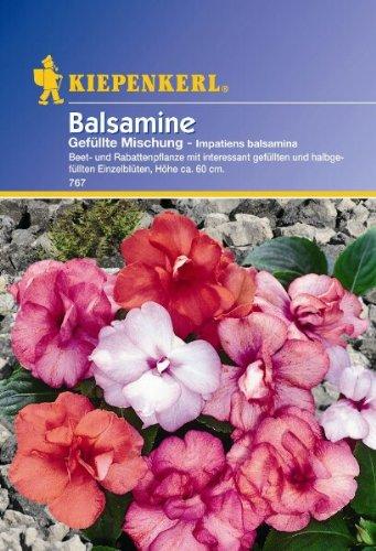 Impatiens balsamina Balsamine gefüllte...