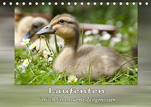 Laufenten - tierisch liebenswerte Zeitgenossen (Tischkalender 2021 DIN A5 quer)