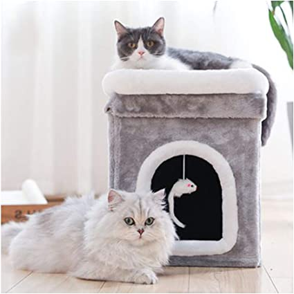 GDDYQ Marco de Escalada para Gatos, Plataforma de Salto para ...