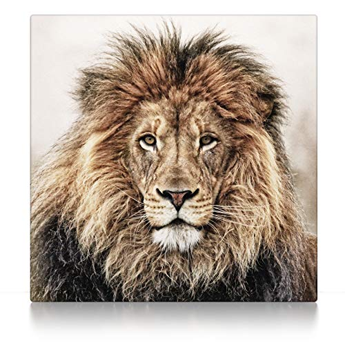 CanvasArts Löwe - Leinwand auf Keilrahmen (80 x 80 cm, Leinwand auf Keilrahmen)