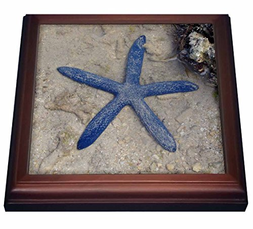 3dRose Rare Blue Sea Star Starfish Waters of Malolo Island Fiji Trivet with Ceramic Tile, 8 by 8', Brown