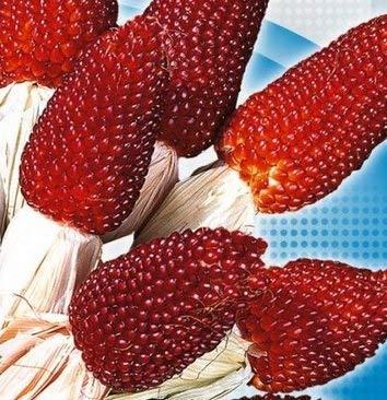 Dekorativer Erdbeermais! - 39 samen