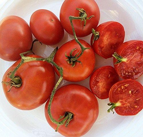 5 paquets de 25 graines Bison - Graines de tomate Heirloom