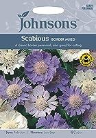 英国ミスターフォザーギルズシード&ジョンソンシードScabious Border Mixed スカビオーサ・ボーダー・ミックス