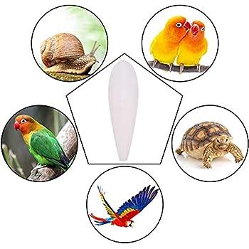 XMYNB Les oiseaux adorent les seiches pour calopsittes, perruches, pinsons, canaris, inséparables, petites conures, mynahs, toucans, gris africain et tous les perroquets