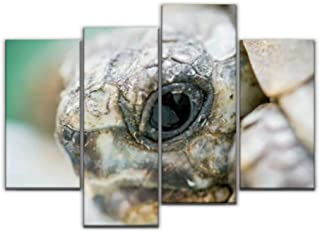 4 Panel close up of baby tortoise head endangered marine animalss and Canvas Pictures Home Decor Gifts Canvas Wall Art for...