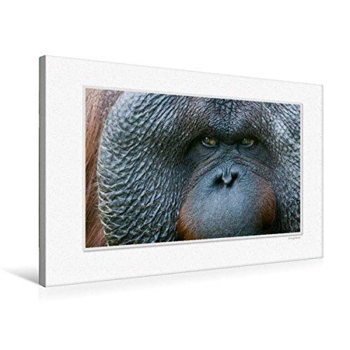 CALVENDO Lienzo de Tela 75 cm x 50 cm, Horizontal, un Motivo del Calendario Emocional Moments: los Ojos de los Animales. Cuadro de Pared en Lienzo, diseño de Animales