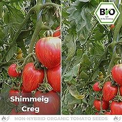 Pepperworld Shimmeig Creg Bio Salat-Tomate, 10 Korn, Tomaten-Saatgut zum Anpflanzen, saftig und fleischig