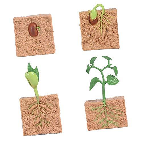 Hellery Natur Pflanze Samen Wachstum Portikus Vorschule Lernen Imaginatio