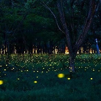 Firefly's Dance