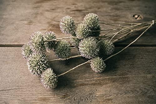 NaDeco Eryngium planum Natur ca- 40-6cm...