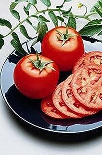 bush goliath tomato
