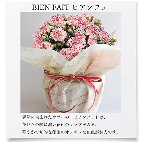 母の日のプレゼント花鉢カーネーション鉢花5号鉢ラッピング・母の日カード付き(複色・ビアンフェ)
