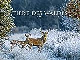 Tiere des Waldes 2021 - Bild-Kalender quer 56x42 cm - Tierkalender - Wald - Wand-Kalender - Alpha Edition