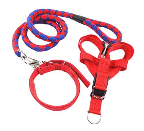 Diyafas Nylon Gewebt Hund Leine Halsband Geschirre 3 Satz Haustier Ausbildung Hundeleine Perfekt für Kleine Mittlere und Große Hunde