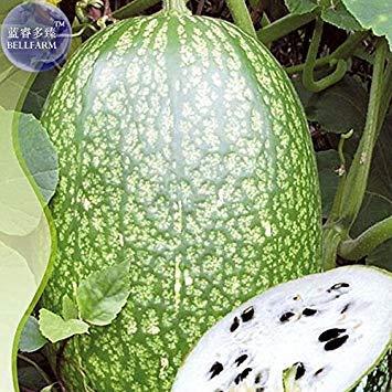 Potseed 2018 heiße Erbstück Malabar Kürbis-Samen, Originalverpackung, 8 Samen, Feigenblatt-Kürbis Chilacayote Asian Kürbis IWSB117