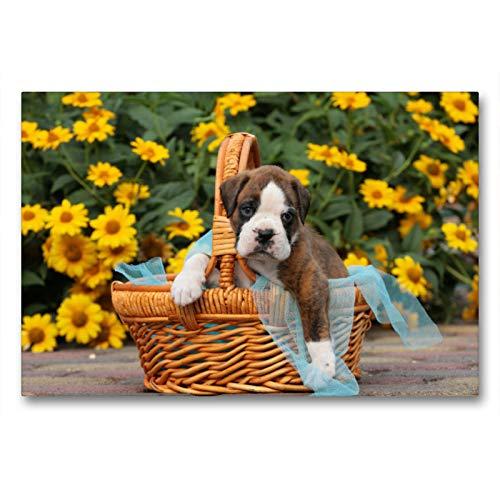 Premium Textil-Leinwand 90 x 60 cm Quer-Format Ein Korb voll Glück - Boxerbaby | Wandbild, HD-Bild auf Keilrahmen, Fertigbild auf hochwertigem Vlies, Leinwanddruck von Kerstin Mielke