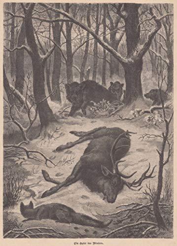 Tiere - Opfer des Winters. Verendeter Hirsch und nach Futter suchende Wildschweine, im Vordergrund sieht man einen Fuchs. [Grafik]