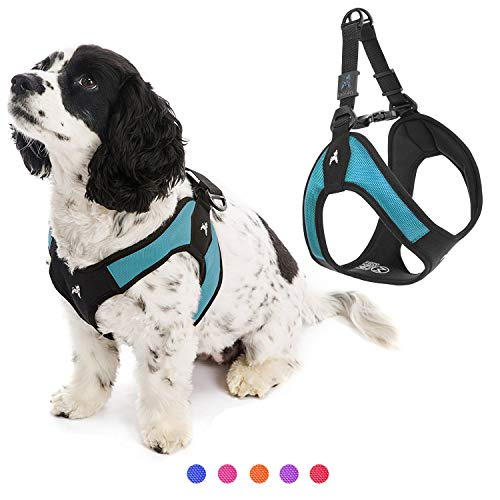 Gooby Dog Harness - Turquoise, Medium - Escape Free Easy Fit Patented Step-in Small Dog Harness - Perfect on The Go - No Pull Harness for Small Dogs or Cat Harness for Indoor and Outdoor Use