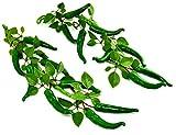2 paquetes Verde Pimientos picantes Cuerda Planta de plástico artificial artificial Flores para la decoración del hogar Plantas de plastico Flores Pimientos picantes Cuerda de chiles