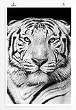 Eau Zone Home Bild - Tierbilder – Porträt Eines weißen