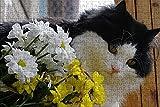 LHJOY Puzzle Grande Puzzle 10000 Gato con Ramo Regalo de cumpleaños 75x50cm