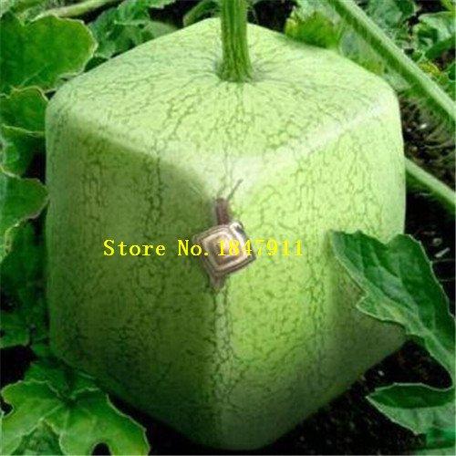 Jaune: Big Sale emballage d'origine 30 graines/Paquet, fruits Graines de melon d'eau Pot, Beauté noire pastèque, des semences de pastèque