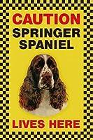 CAUTION SPRINGER SPANIEL LIVES HERE サインボート:スプリンガースパニエル 写真 画像 英語 看板 Made in U.K [並行輸入品]