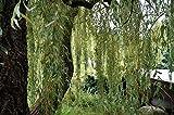 Fiori Piante Perenni Alberi Arbusti Piante Giardino