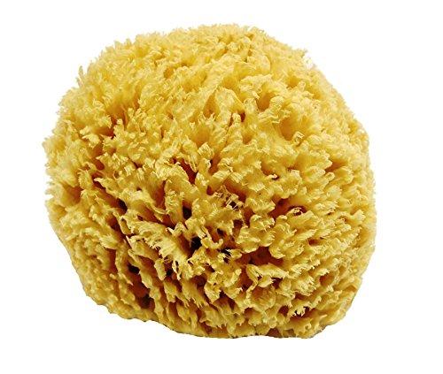 Spugna di mare naturale a nido d'ape non candeggiata - forte e resistente - 100% naturale e biologica - ipoallergenico - per neonati, bambini e adulti - bagno, esfoliante, arte, animali domestici