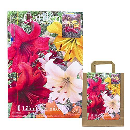 10 echte Lilienzwiebeln in verschiedenen Farben - Blumenzwiebeln in Geschenkverpackung - mehrjährig, gartenpflanzen winterhart Knollen Lilium Lilien - Hohe Qualität (10 Lilien Tiger mix)