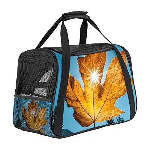 Transportador de mascotas de cara suave, aprobado por la aerolínea, bolsa de viaje impermeable y plegable, luz solar a través de hoja de arce