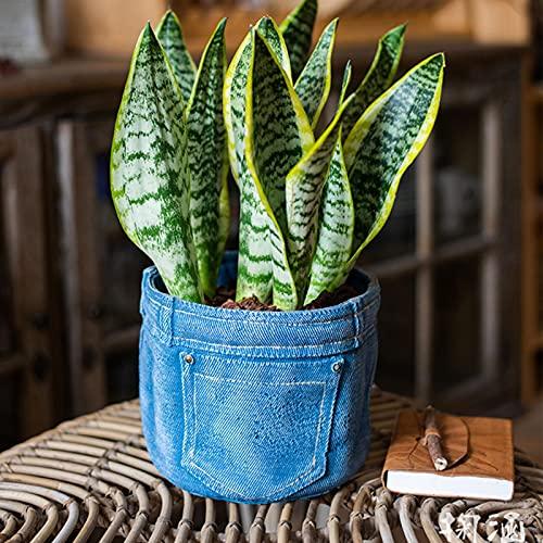 WeBetter Macetas para Flores, Diseño De Bolsillo para Jeans Maceta Suculentas Maceta De Jardín Moderna con Drenaje para Hierbas Planta...