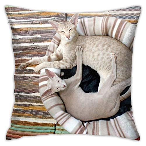 Federa per la casa con gatti siamesi che si rilassano sui tappeti in morbida coperta decorativa a righe, federa per cuscino con 45 x 45 cm