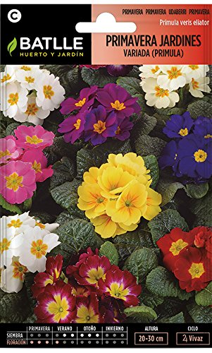 Semillas de Flores - Primavera Jardines variada (Primula) - Batlle