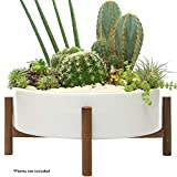 Mid Century Modern Succulent Planter Large | Pot with Wood Stand and Hidden Saucer | Round Ceramic White Planters | Shelf & Table Decor Pots | Cactus and Plant Container with Drainage Indoor