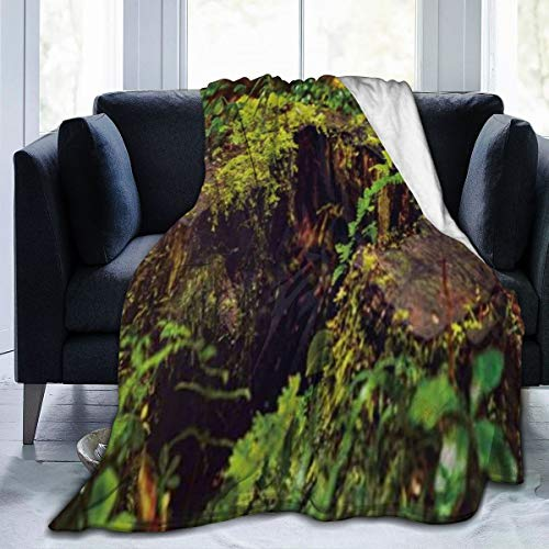 JOSENI Throw Blanket for Kids Teens Adults Lightweight Soft Warm Tree Stump Jungle Moss Grass Leaves Microfiber All Season Living Room/Bedroom/Sofa Couch Siesta Bed Flannel Quilt,60' x 80'