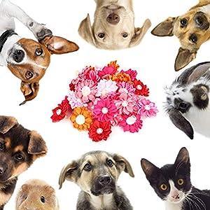 Dog Hair Bows, Soft Durable Cat Hair Bows, Cute 30PCS for Pets Small Dog