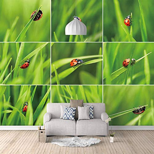 Photo Mural Ladybug Photo Wallpaper Mural Poster Wall Decoration-400X280Cm