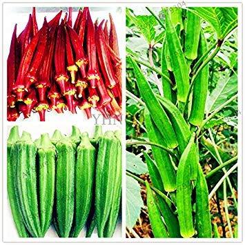 Vista 20pcs/Bag Okra Seeds, Organic Okra Vegetable Seeds Non GMO Tasty for Home and Garden for Fun Countryside Garden Potted Plants