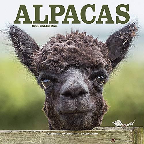 Alpacas Calendar 2020