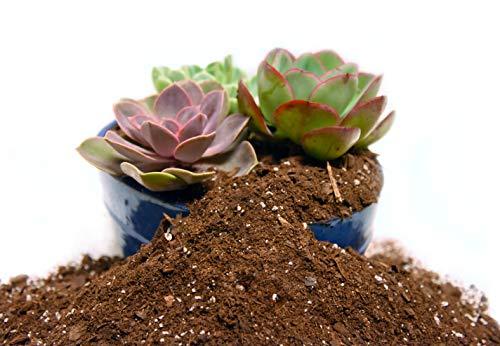 Organic Succulent & Cactus Soil Mix by Perfect Plants (4QTS)
