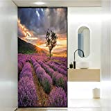 Covering Privacy Film Shower Window Cling, Lavender Idyllic Landscape with Rising Sun and Endless, Privacy Glass Film for Home &Office, W23.6 x H35.4 Inch