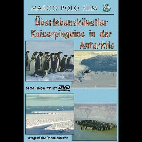 Überlebenskünstler Kaiserpinguine in der Antarktis