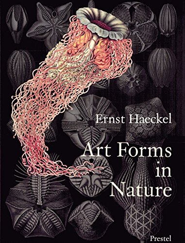 Ernst haeckel art forms in nature /anglais: Prints of Ernst Haekel (Monographs)