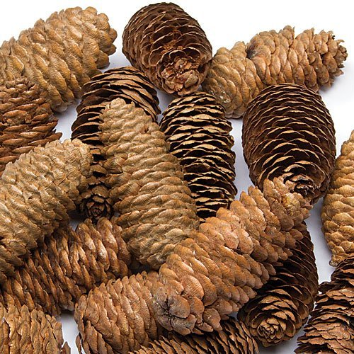 Baker Ross Long Pine Cones Value Pack — Ideaal voor Kids' Arts and Crafts, Kerstmis, Sensory Stimulation en meer (Pack of 20)