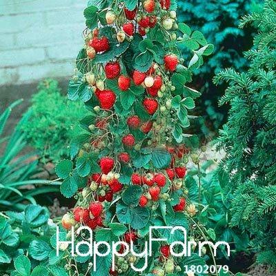 SVI PROMOTION. 100 pcs Arbre d'escalade de fraises cour Jardin avec graines de fruits et de légumes en pot, Hwzrho
