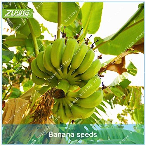 ZLKING 100 Pcs rares Fruits Banana chinois Bonsaï Graines Facile à cultiver sans OGM doux bio pour jardin Fleur Plante
